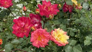 【10月アバイベ】カモむす☆きぃねぇのだべりR∞M