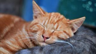 九州在住、2児ママ夏子の【なっちゃんroom】