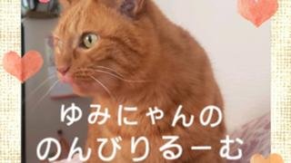 新アバ配布中☆ゆみにゃんのキャラさん大好きルーム