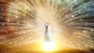 🌈幸せの楽園🌈happy paradise🌈