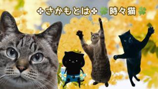 アバ権ピンチ꜆꜄꜆】✤さかもとは✤☘️時々猫☘️