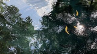 みむりんのmelting room♡