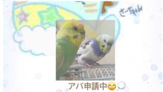 さーちゃん 応援ありがとうo(^-^)o