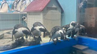 ペンギンのいるBAR池袋