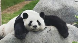 Panda@456