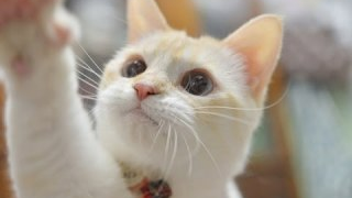 DJ.Cat ネコ太郎