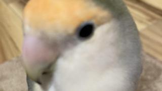 ひなちゅん【女子高生ミスコン2020】