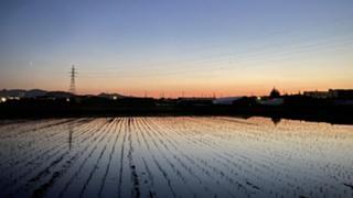 続・白黒つけたら熊猫どうなる?【8匹配付中】
