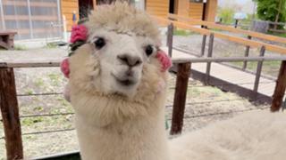 LSアイドル候補生069【結城檸檬】