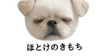 中崎敬介@33回ジュノンボーイコンテスト