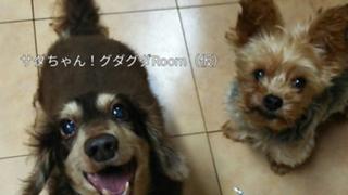 サダちゃんRoom(仮)